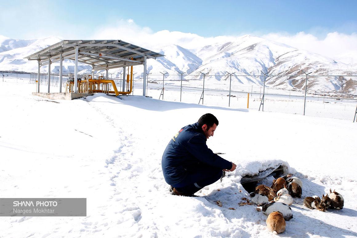 گرمای گاز در پهنه سپیدپوش آذربایجان غربی