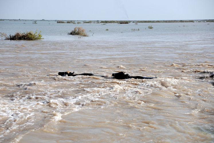 افزایش ورودی آب به هورالعظیم پس از هدایت آب از رودخانه نیسان
