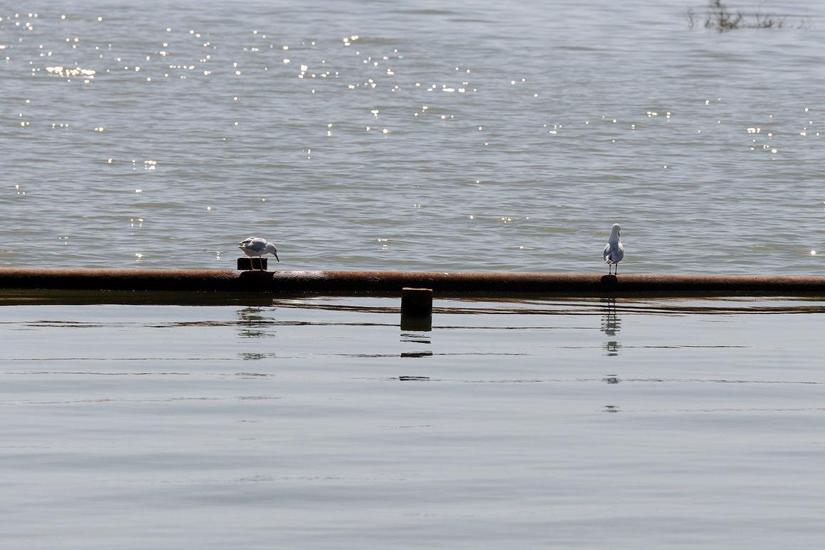 تسهیل شرایط ورود آب به هورالعظیم