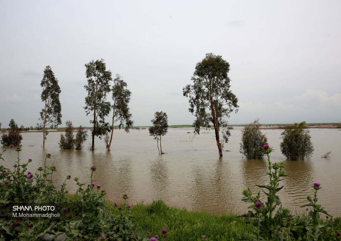 تشریح اقدامات اچاسیی شرکت ملی نفت برای مقابله با سیلاب