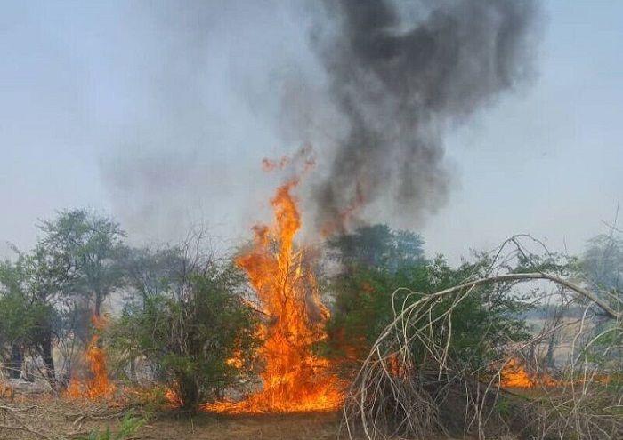 مهار آتشسوزی جنگلهای غیزانیه به همت نفت و گاز مارون