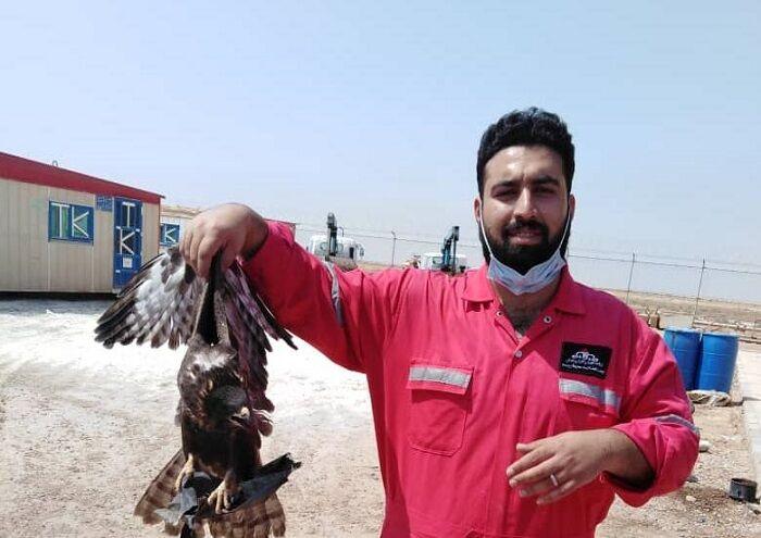 پرنده شکاری با تلاش کارکنان اچاسیی اروندان نجات یافت