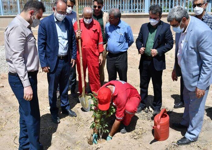 کاشت ۳ هزار اصله نهال در منطقه کریتکمپ