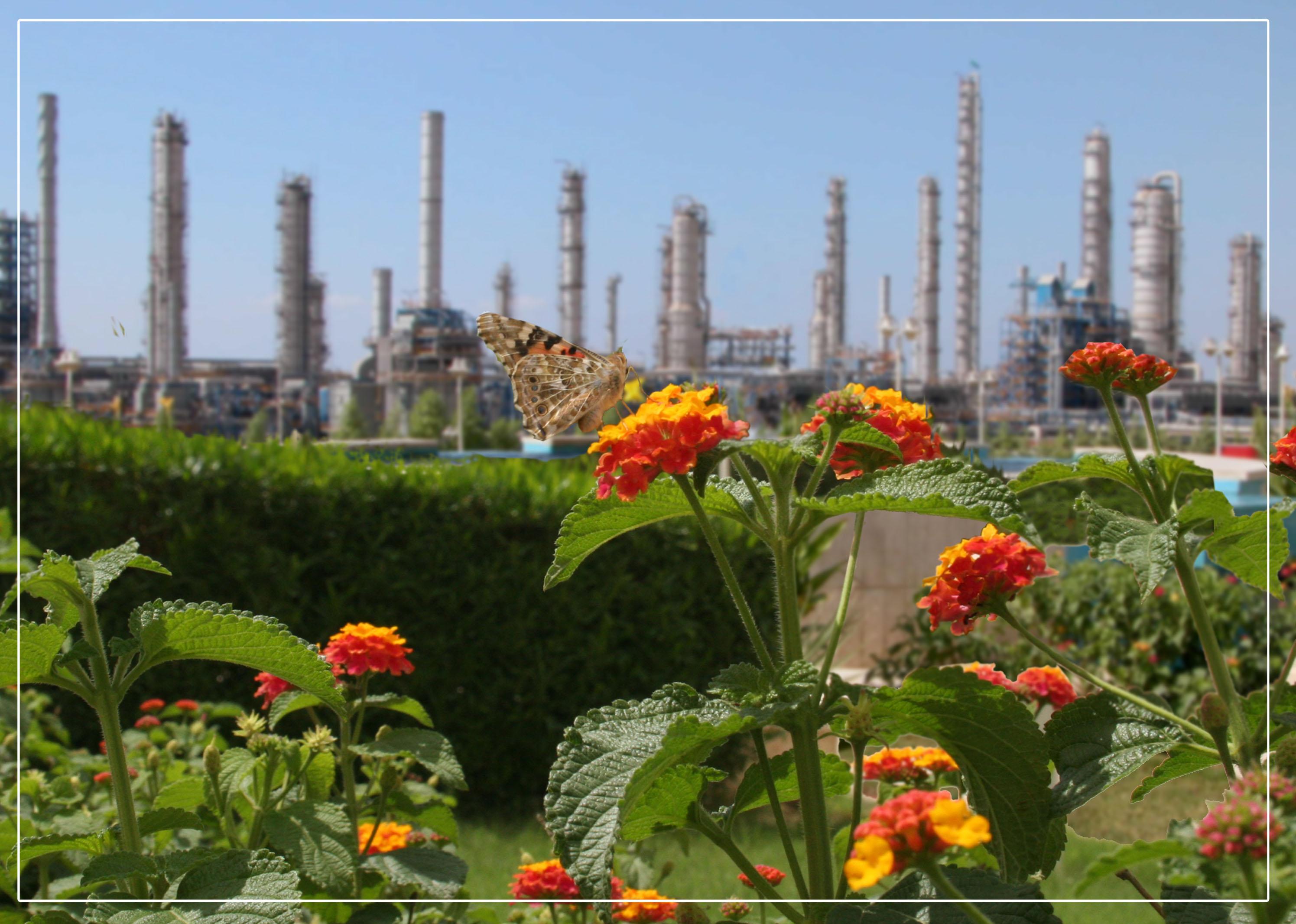 پایش مستمر پروژههای زیست محیطی مجتمعهای هلدینگ خلیج فارس