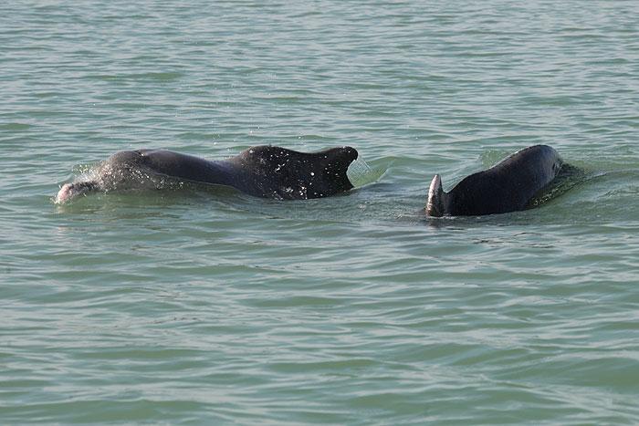 حفاظت از دلفینها